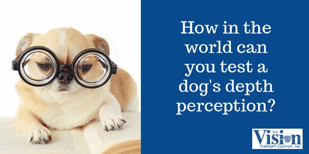How do you test a dog's depth perception?