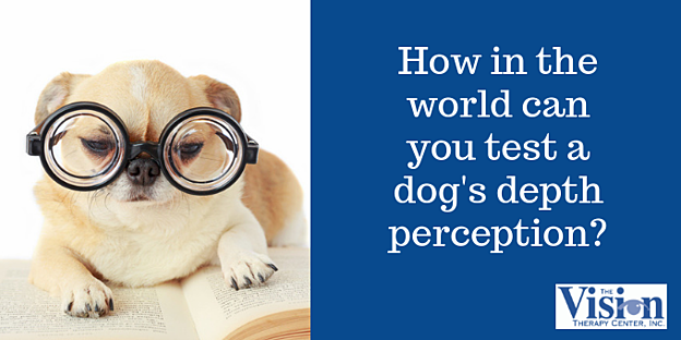 How do you test a dog's depth perception?